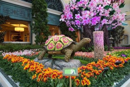Bellagio Conservatory & Garden 2016