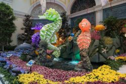 Seahorses at Bellagio Conservatory & Botanical Gardens