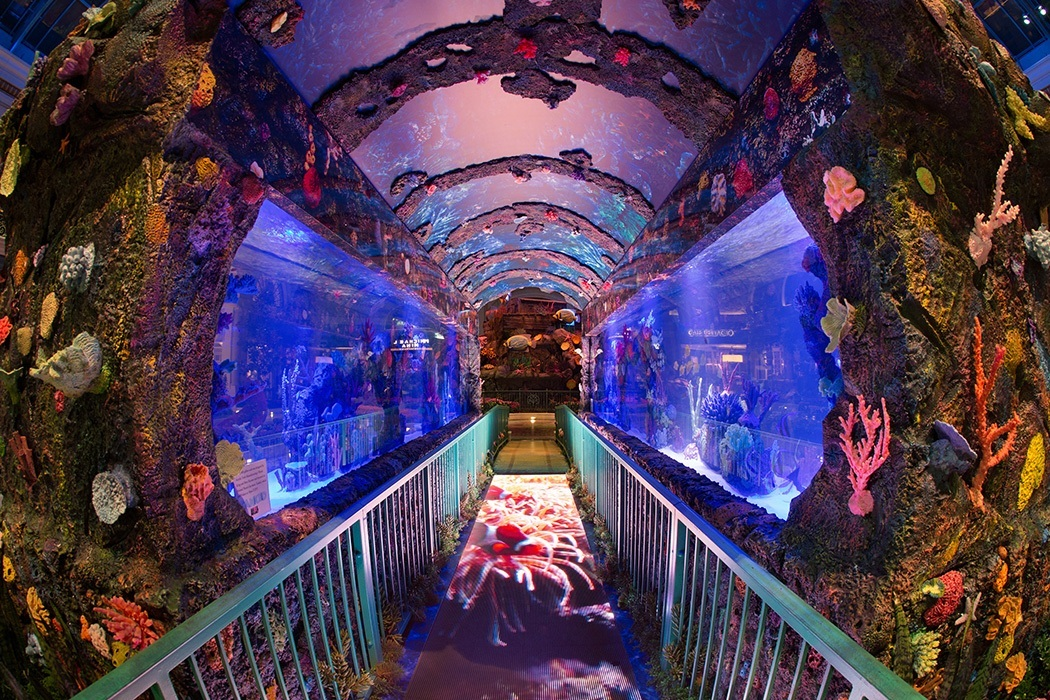 Treasures of the deep are ready to be explored in las for Fish tank las vegas