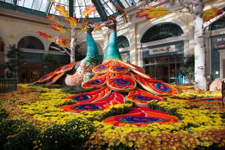 Bellagio's Conservatory & Botanical Gardens Harvest Display